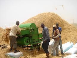 Commercialisation du riz de la vallée du Fleuve Sénégal